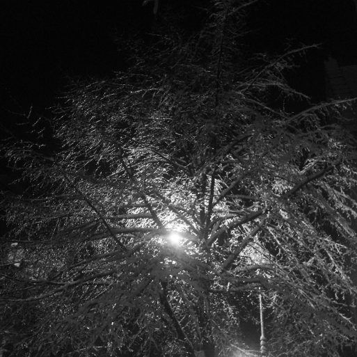 A Winter  Night in Harlem