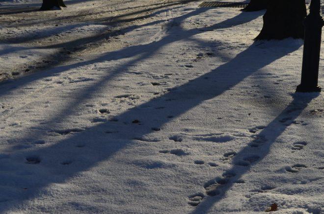 Snow Shadows in Riverside Park