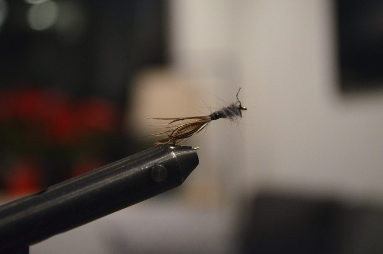 First Fly