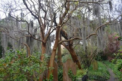 Graveyard in Charleston
