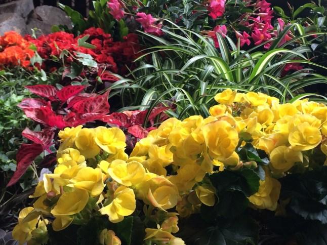 Flowers at the Urban Garden Center