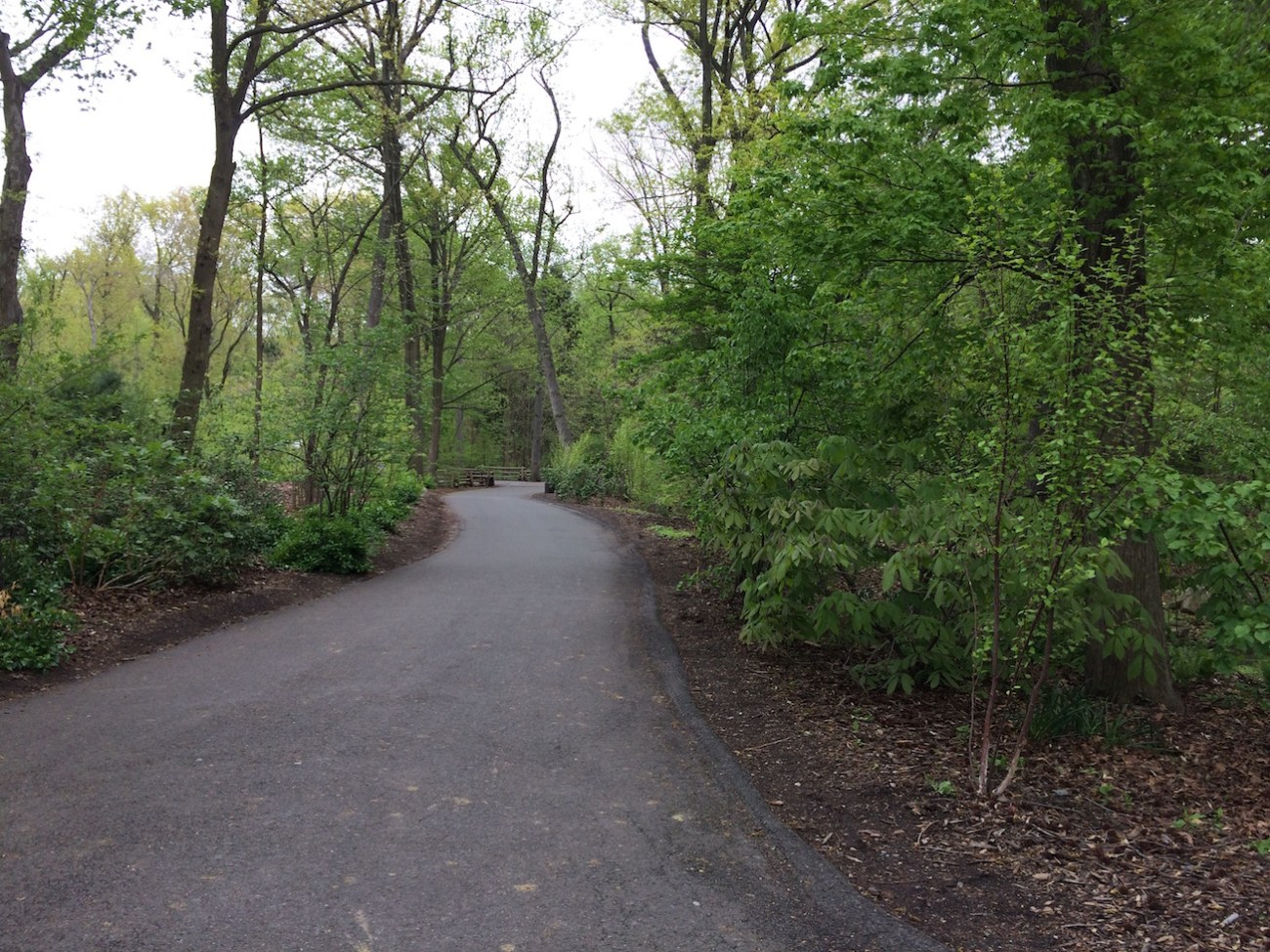 Path at the Bronx Zoo