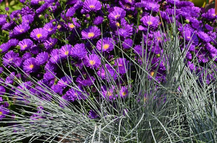 Purple Flowers in Paris