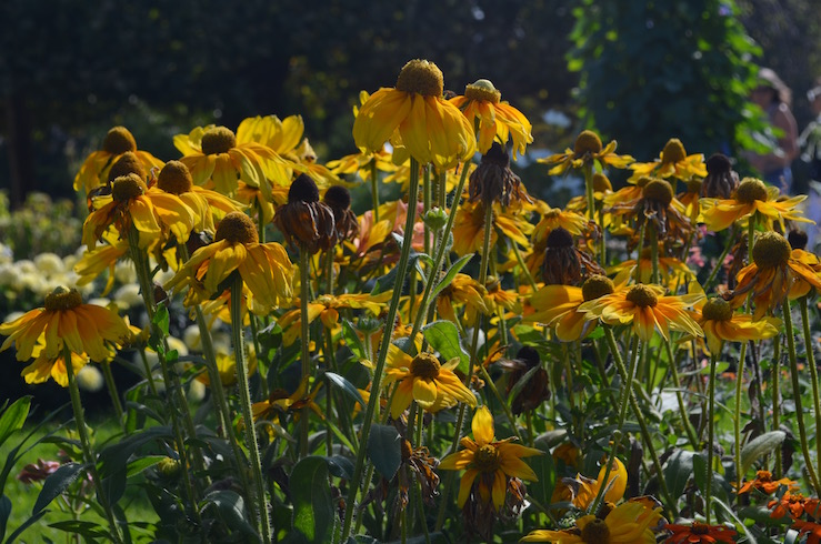 Yellow Flowers in Paris