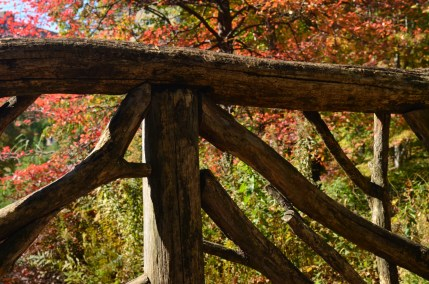 Central Park Fall 2013 5