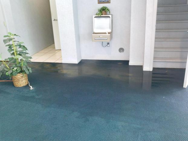 Carpet Cleaning Full Circle Carpet And Upholstery