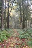 woodland path in autumn