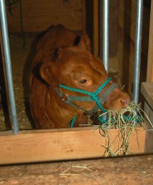 weaning time for Lucy