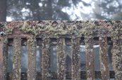 moss on garden gate