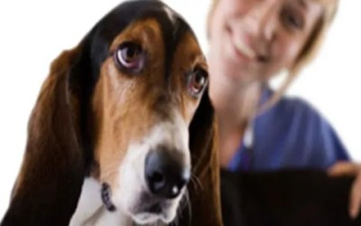 Have You Scheduled Your Pet Friend Visit to the Vet?