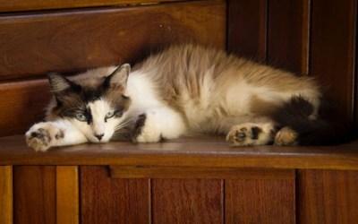 Aging Cat Behavior Changes