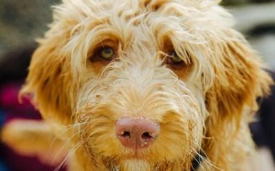 National Mutt Day aka National Mixed Breed Dog Day