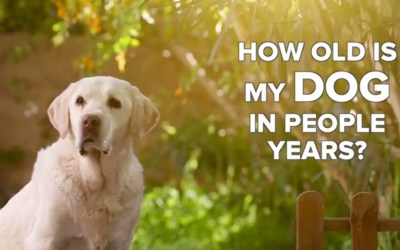 Dog Years to Human Years – It's NOT 7 to 1