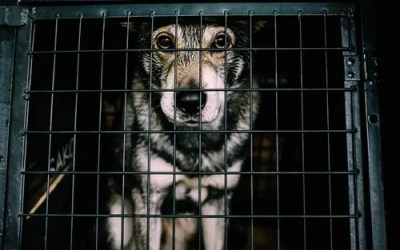 Puppy Mill Awareness Day – You Make A Difference