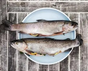 Tasty trout for feline food