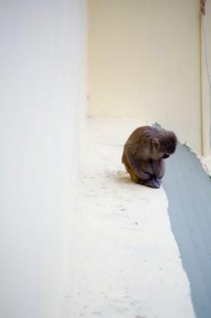 waiting to come inside my room monkey
