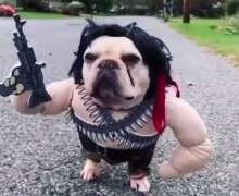 Sylvester Stallone Comments on Rambo Dog Halloween Costume – VIDEO