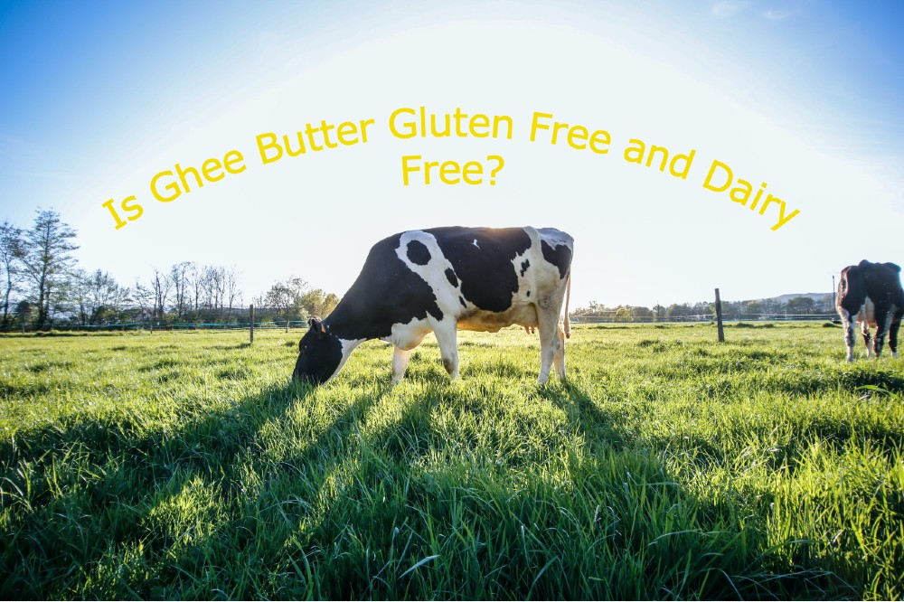 Is Ghee Butter Gluten Free and Dairy Free?