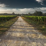 Terroir: My Life With A Sense of Place