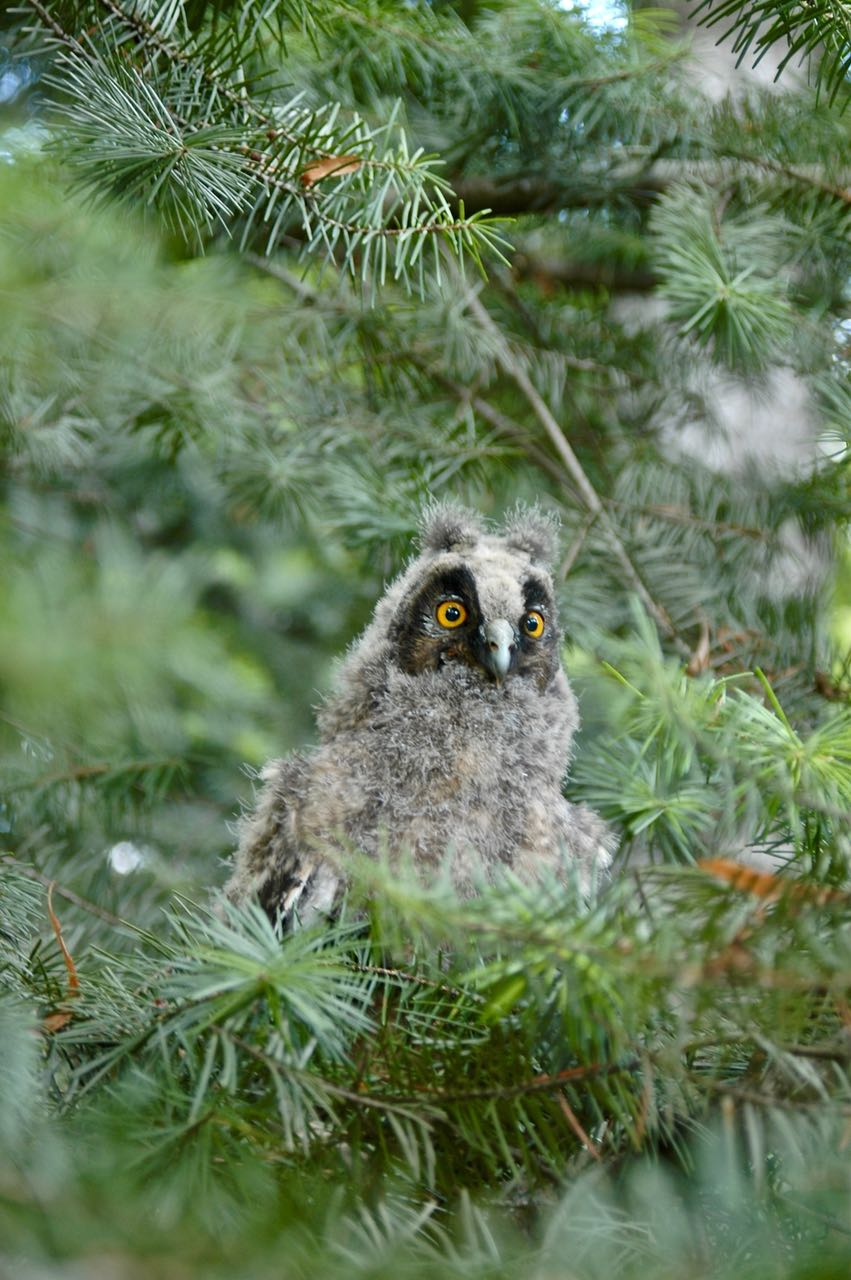 This cute baby owl suggests softness and stoicism as it sits alone on a tree branch. In therapy and the tradition of shamanism, the capacity to be alone and still retain the qualities of gentleness and connection to the world, are difficult but important to cultivate.