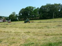 Working the Hay Field