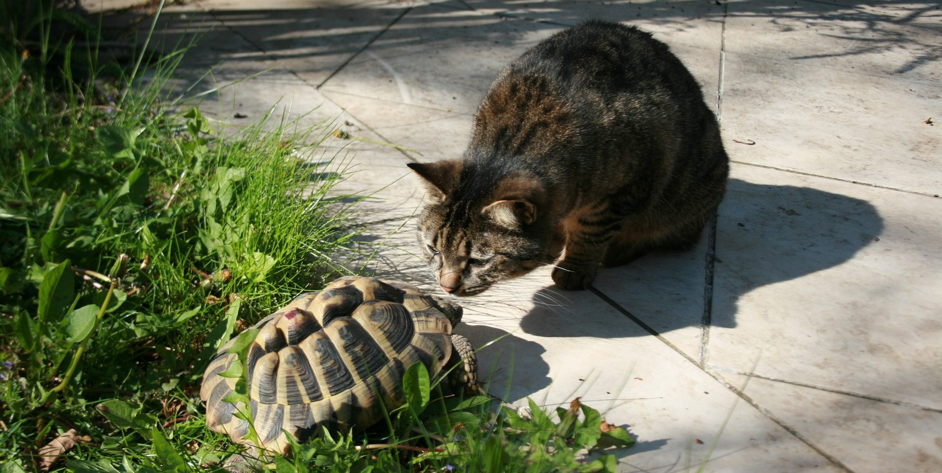 A turtle and cat make friends.