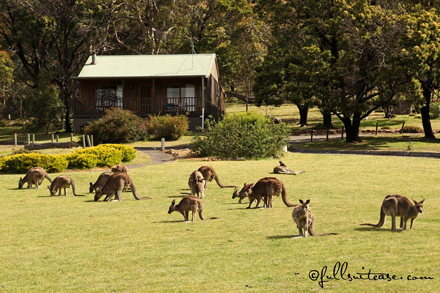 Family trip to Australia with young children