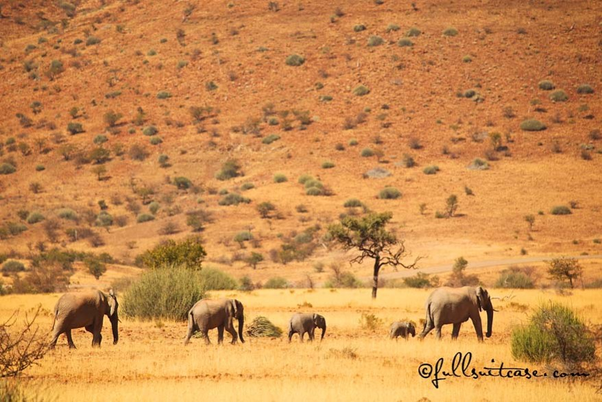 Herd of elephants in Namibian desert near Palmwag