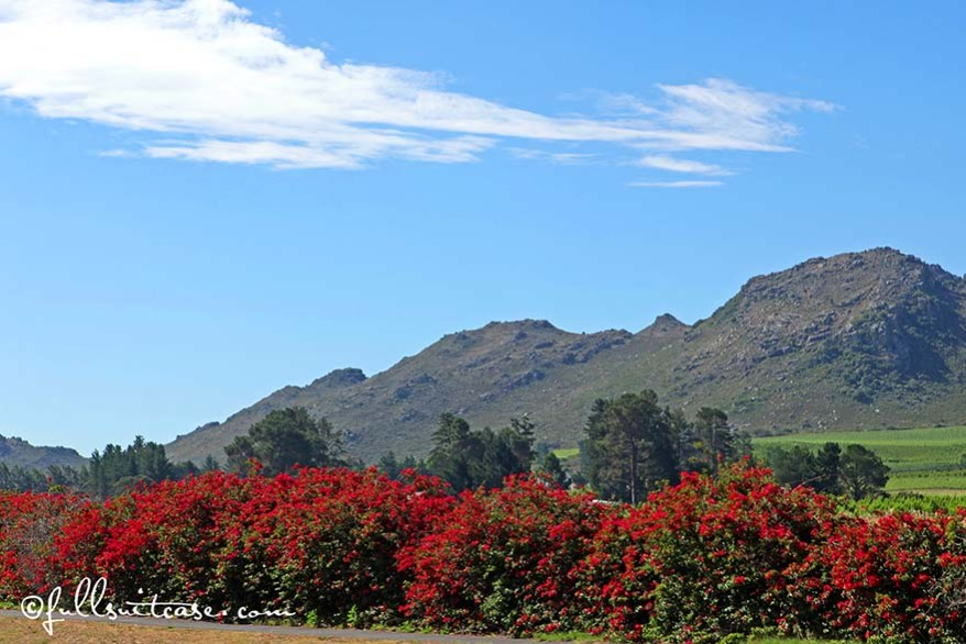 Mountain landscape at South Africa's wine region between Stellenbosch and Franschhoek