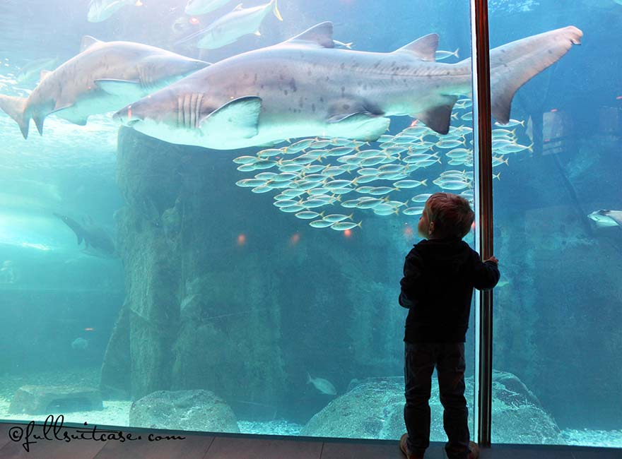 Little boy watching sharks in Cape Town aquarium