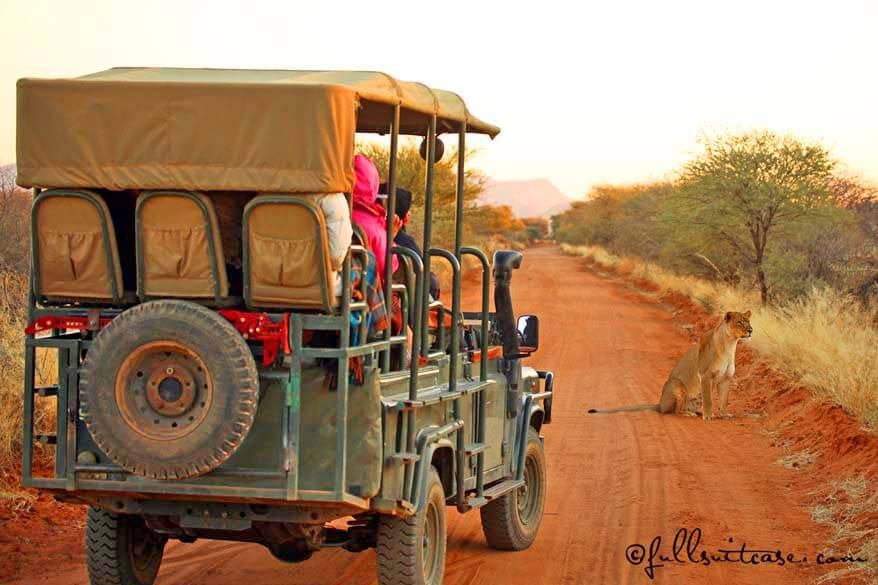 African safari tips and all you need to know