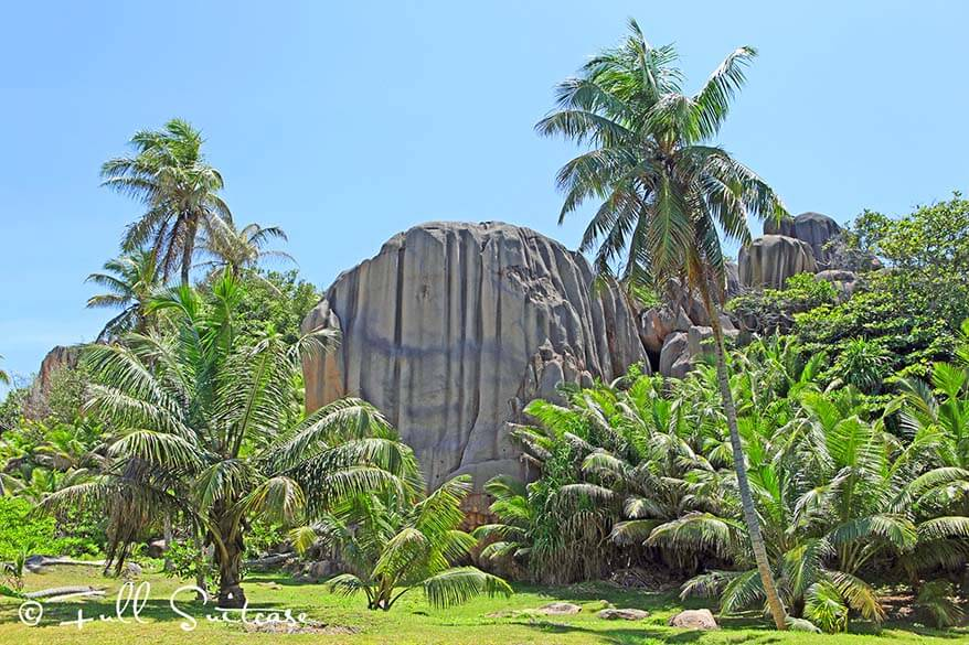 Giant palm trees and granite boulders. Grande Soeur in Seychelles