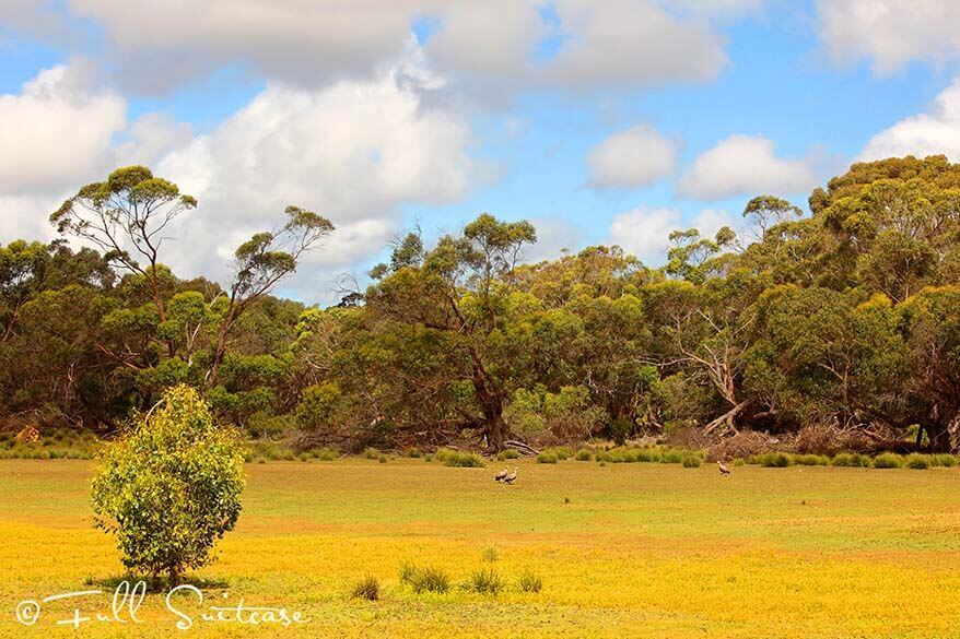 Scenery of Flinders Chase National Park on Kangaroo Island