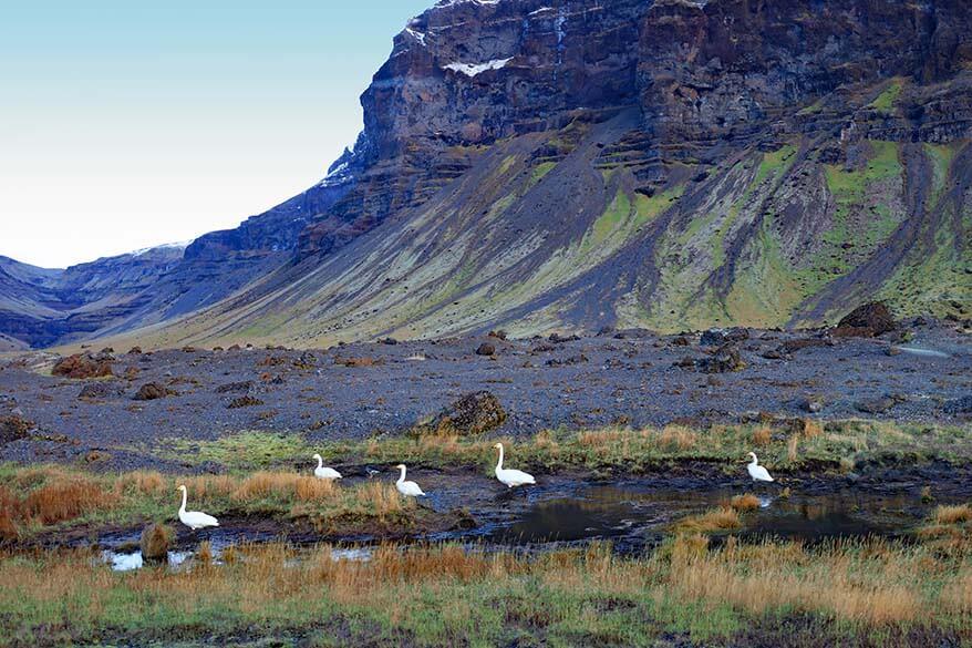 Scenery along South Coast Iceland