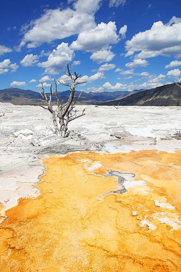Upper Terraces at Mammoth Hot Springs in Yellowstone National Park