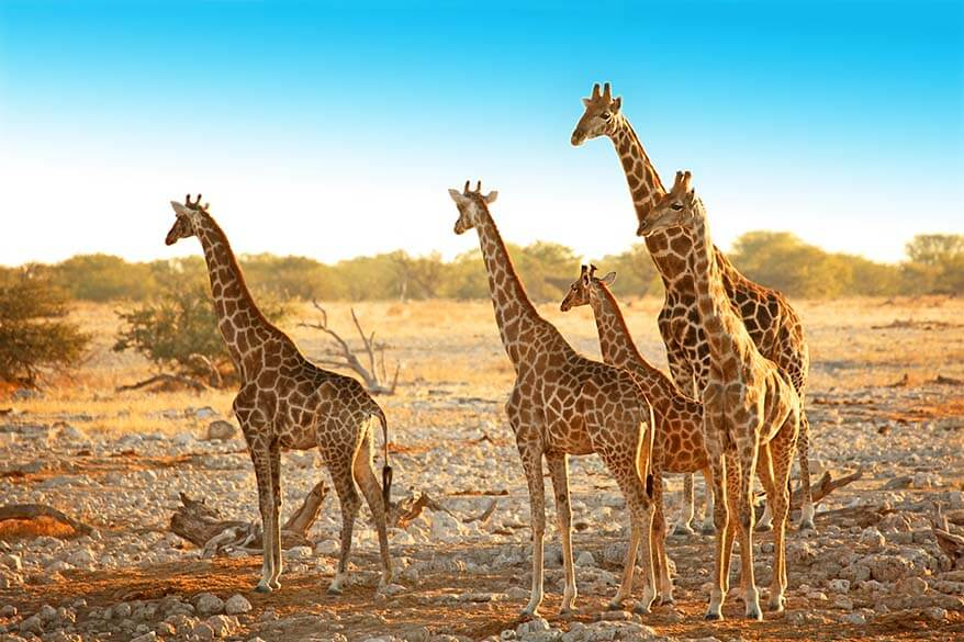 Etosha National Park is a must see in Namibia