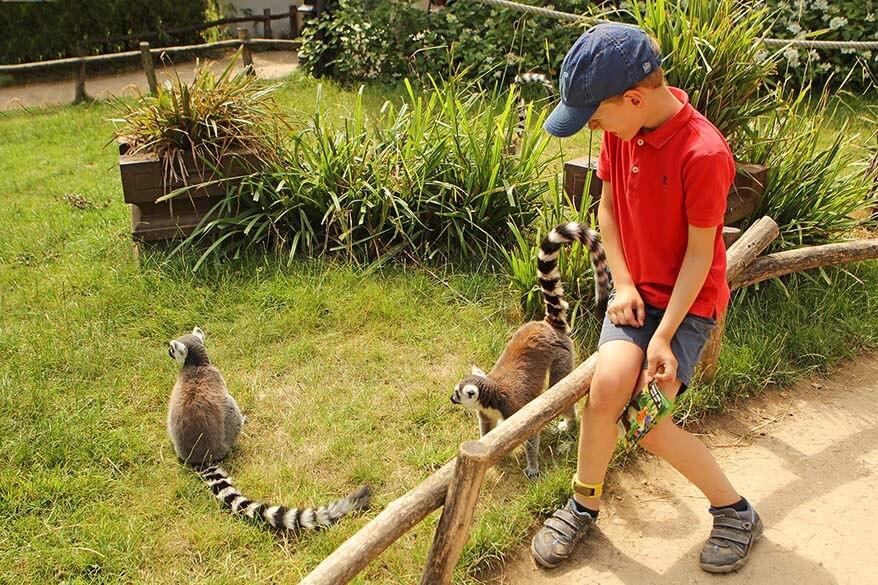 Walking among monkeys in Planckendeal zoo is great fun for kids