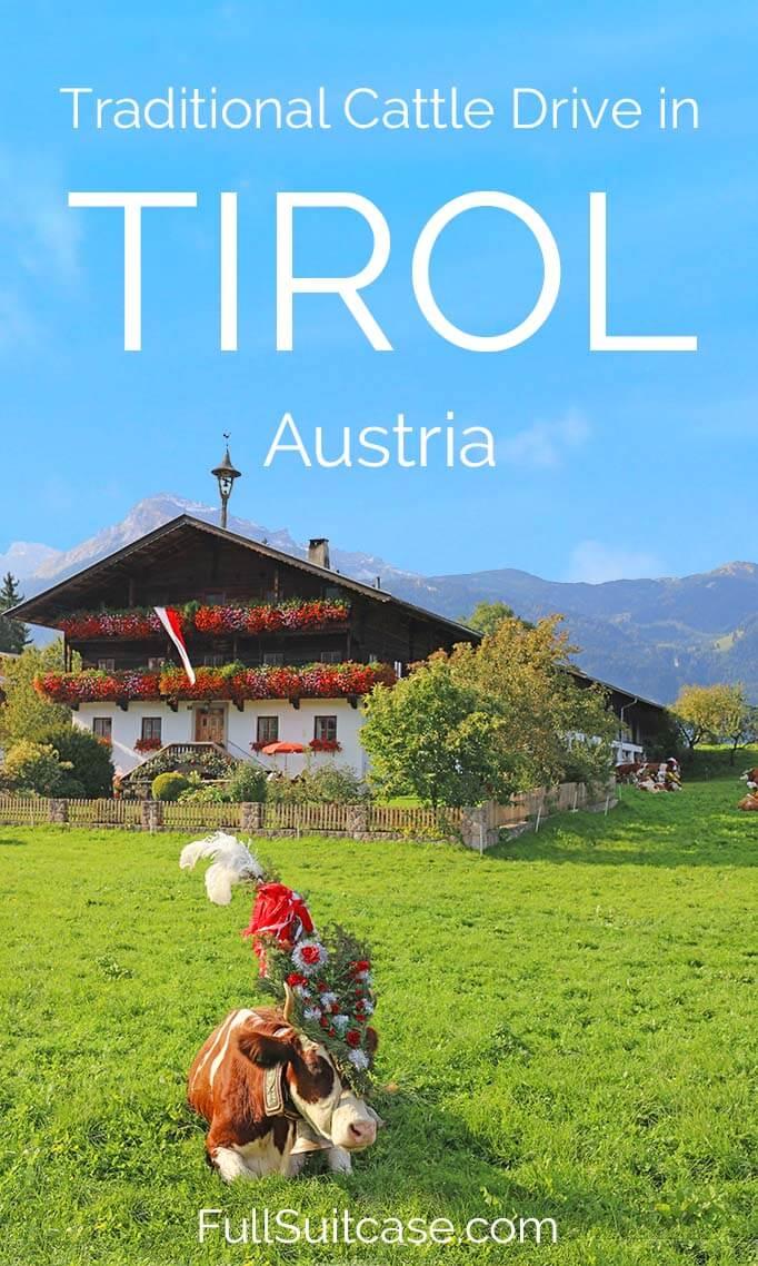 Traditional Cattle Drive in Tirol Austria - Almabtrieb