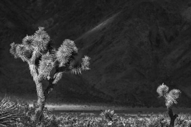 Joshua trees against the desert mountain backdrop (I just love B&Ws!)