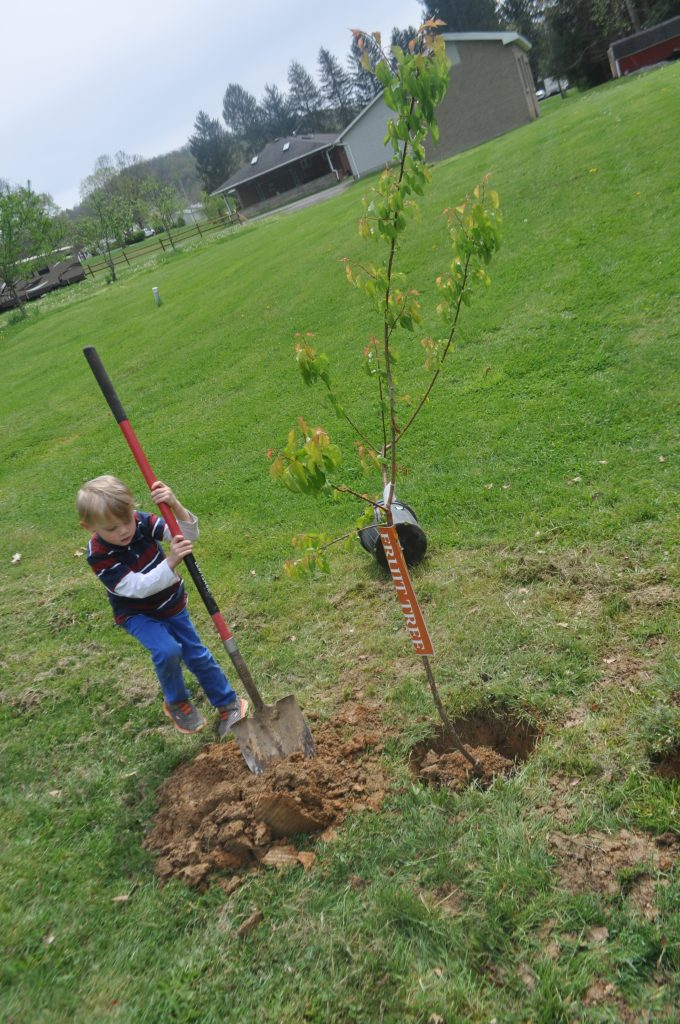 My son helping plant a fruit tree for Earth Day 2017