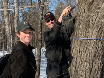 Tapping Maples