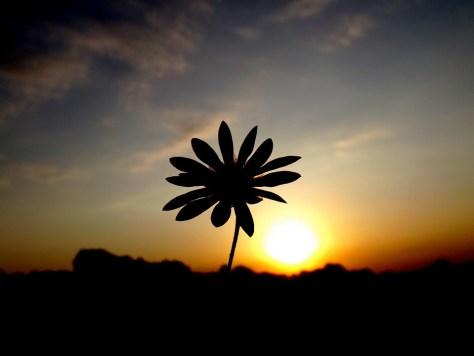 flor sombra