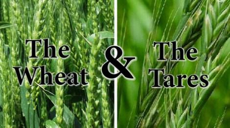 wheat-tares