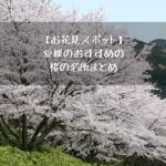 【お花見スポット】愛媛県のおすすめの桜の名所まとめ