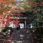 【紅葉の名所】四国霊場第88番札所、紅葉が美しい『大窪寺』