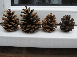 pinecone-weather-station