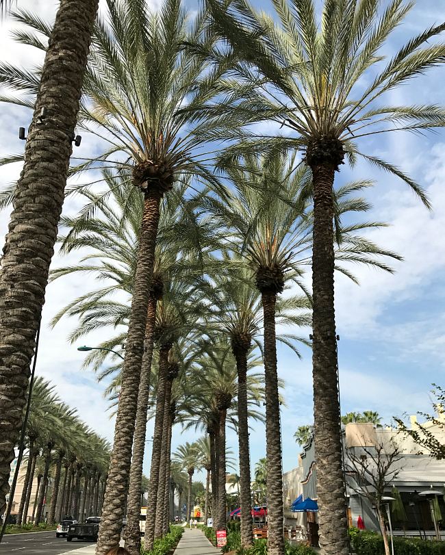 Things to do in Anaheim