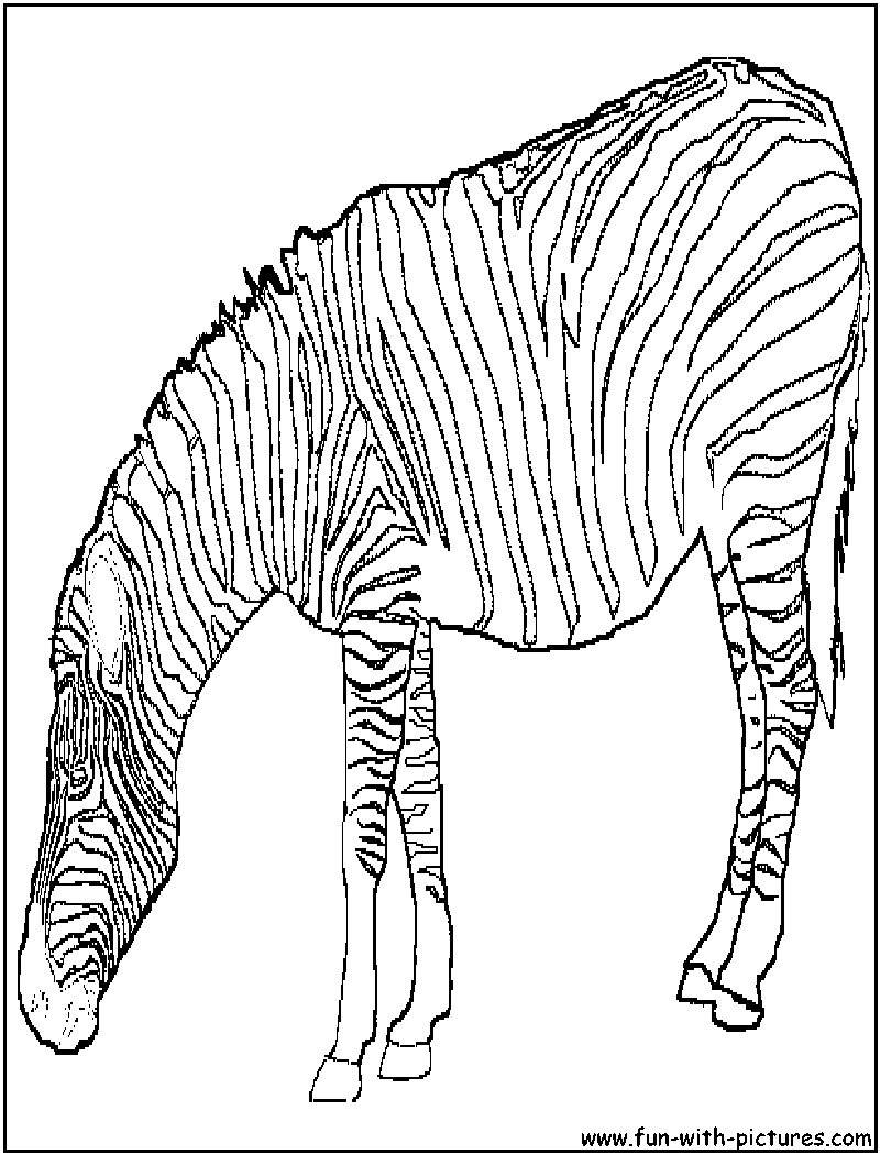 baby zebra coloring pages coloring pages amp pictures imagixs