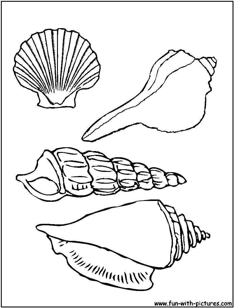 printable crafts coloring pages fun pictures seashells coloring page