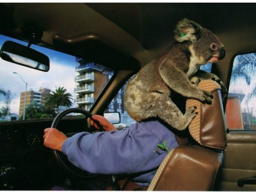 The number 1 cause of car accidents in Australia